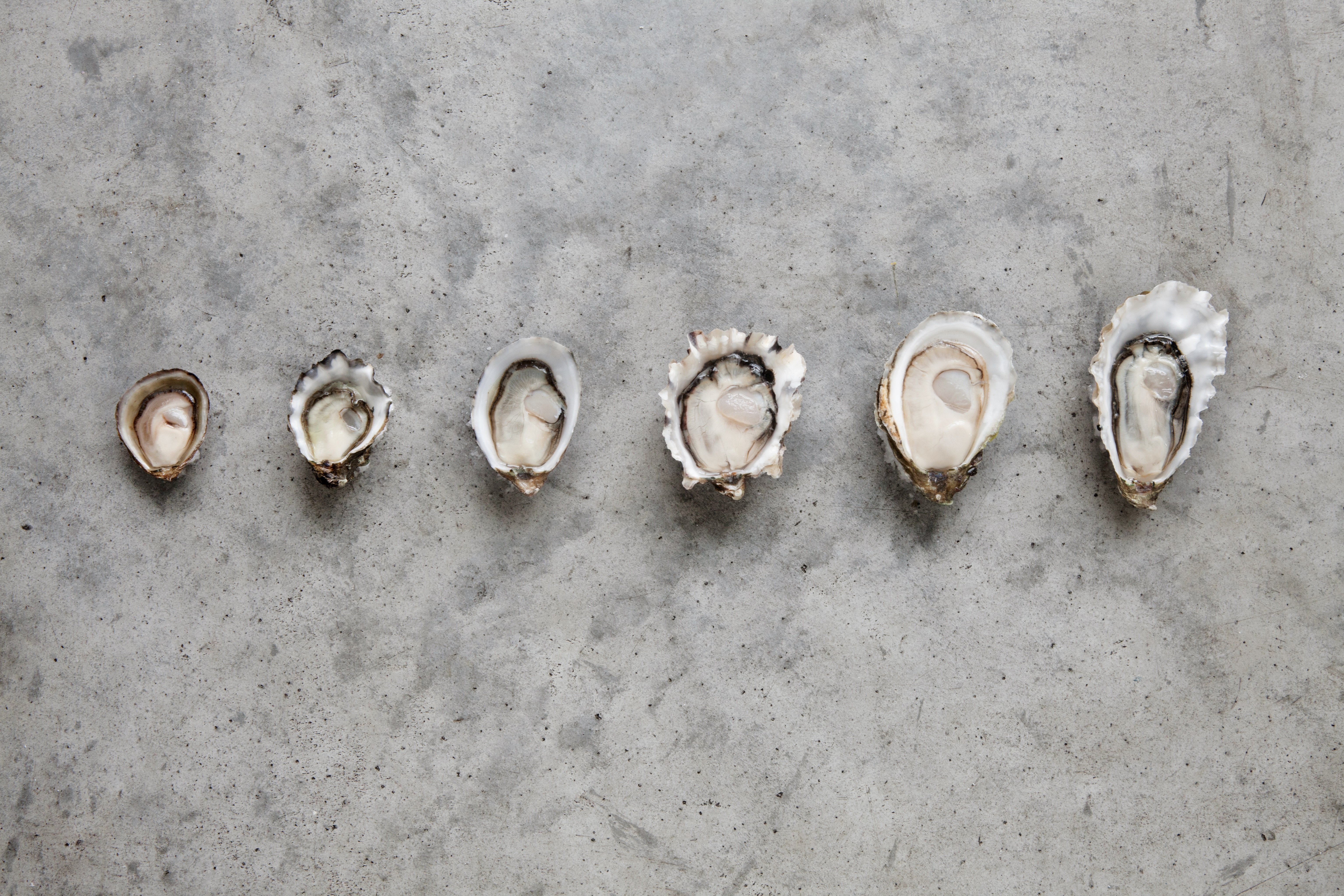 oyster-size.jpg
